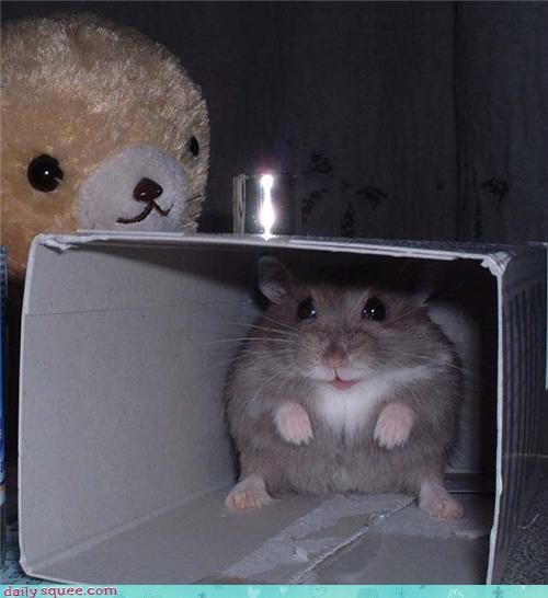 bear cute hamster hiding teddy