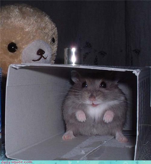 bear cute hamster hiding teddy - 4269548032