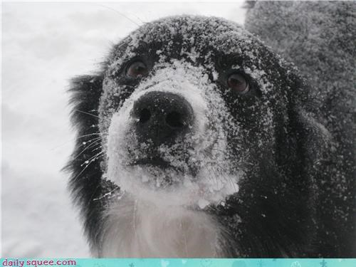 dogs snow user pets - 4269590272