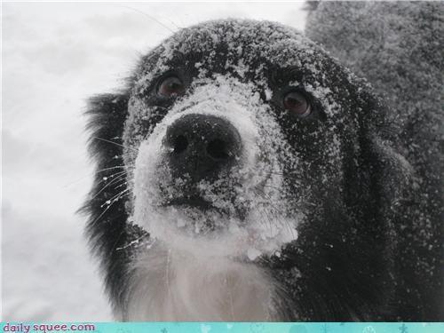 snow user pets - 4269590272