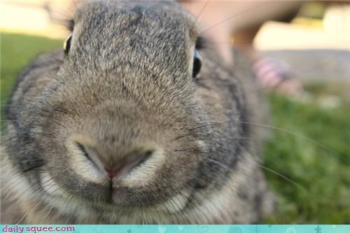 booper bunny cooper cute cute baby animals user pet - 4269870080