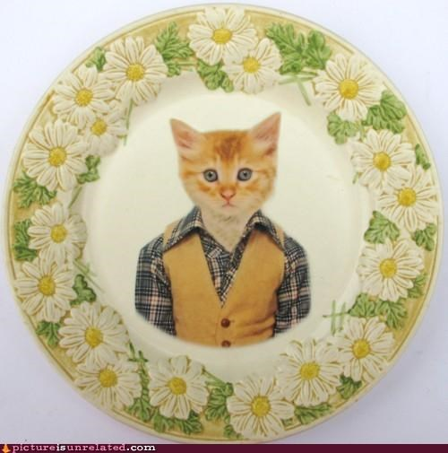 art,cat,cute,plate,wtf