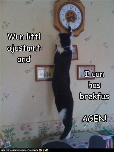 adjustment breakfast caption captioned cat changing clever clock excited plan time - 4270081280