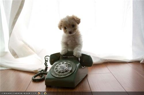 answer cyoot puppeh ob teh day perching phone phone call puppy question ringing whatbreed - 4270617088