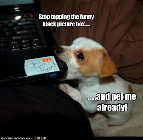Stop tapping the funny black picture box..... .....and pet me already!