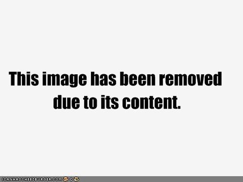 Cheezburger Image 4271265024
