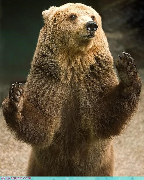 fishing bear claws squee grizzly bears - 4271949312