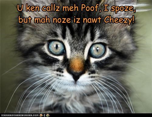 Cheezburger Image 4272070656