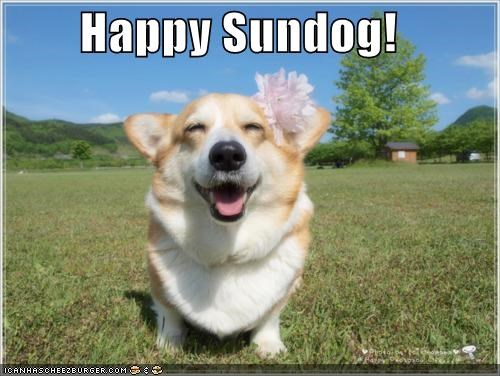 corgi,Flower,Hall of Fame,happy,happy sundog,smiling,Sundog,sunny