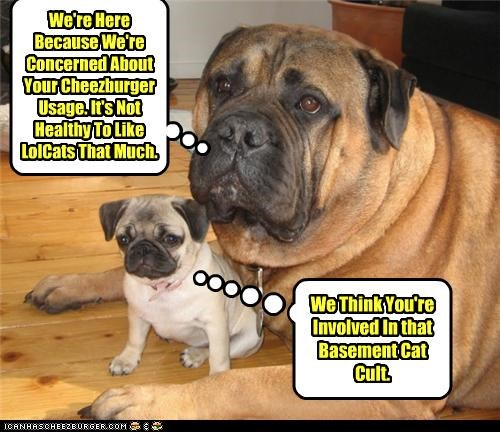 Cheezburger Image 4272928000