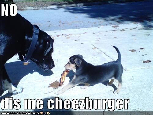 Cheezburger Image 4273305600