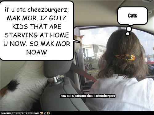 Cheezburger Image 4273418752