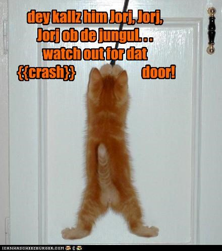 caption captioned cat door george of the jungle kitten song string swinging tabby Theme Song watch out - 4273658624