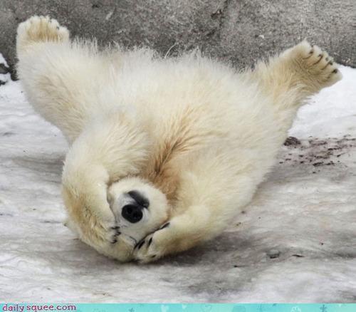 acting like animals bad idea do not want facepalm ice cream mistake pain polar bear regret stupid - 4273660160