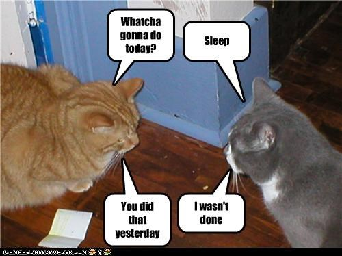 Whatcha gonna do today? Sleep You did that yesterday I wasn't done