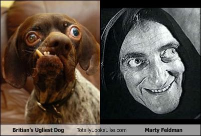 britain dogs marty feldman ugliest dog ugly