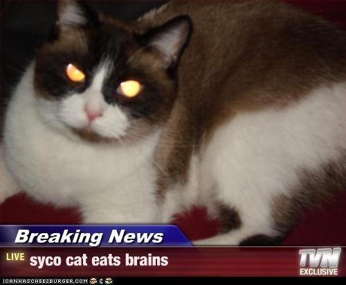 SYCO THE CAT