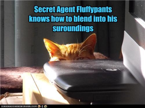 Secret Agent Fluffypants knows how to blend into his suroundings
