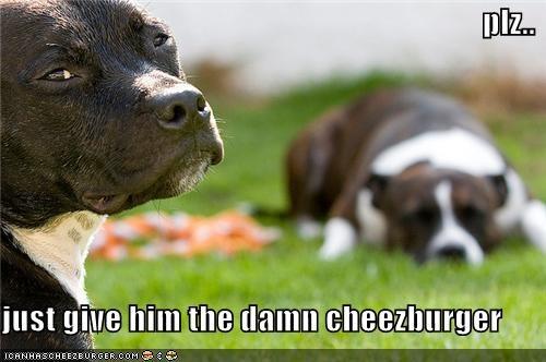 Cheezburger Image 4276817152