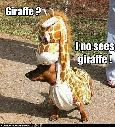 cant-see,confused,costume,dachshund,dressed up,giraffes,Hall of Fame