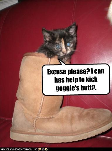 asking,boot,butt kicking,caption,captioned,cat,excuse me,goggie,help,kitten,please,question
