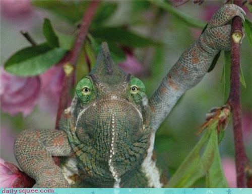 lizards climbing chameleons tree branches - 4277860096
