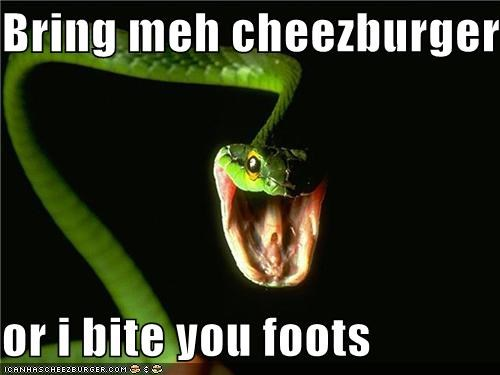 Cheezburger Image 4277882624