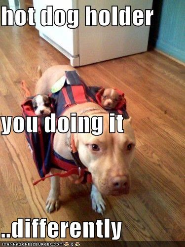 differently,doing it,holder,hot dog,pit bull,pit bulls,pitbull,pitbulls,puppies,puppy