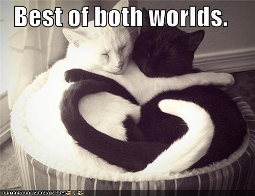 basement cat best best of both worlds caption captioned cat Cats ceiling cat cuddling evil good opposites sleeping - 4278589184