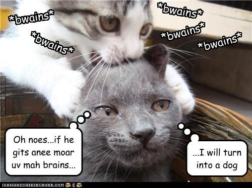afraid brains caption captioned cat Cats dogs fear Hall of Fame oh no transformation transforming zombie - 4279514368