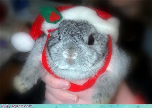 Bunday,christmas,reader squee,rabbit,squee,santa hat,holidays