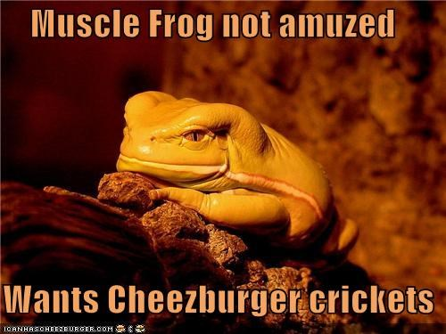 Cheezburger Image 4279774208
