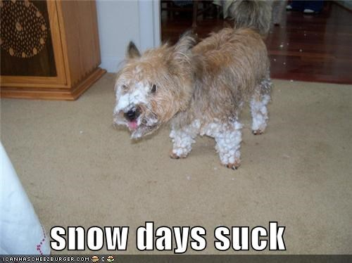 clumbs,do not want,mixed breed,snow,snow day,snow days,stuck,terrier,unhappy
