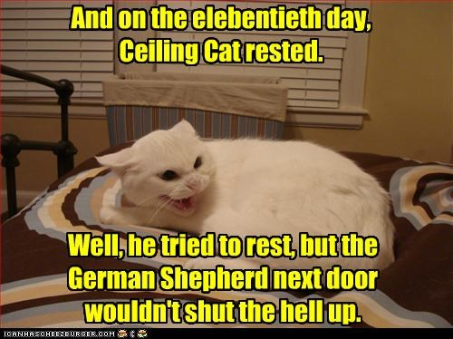 annoyed,attempt,caption,captioned,cat,ceiling cat,day,displeased,do not want,elebentieth,FAIL,german shepherd,rest,story