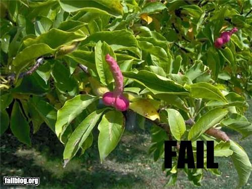 failboat Flower innuendo nature shape Things That Are Doing It - 4280639488