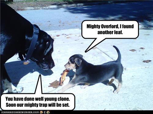 clone errand labrador leaf master overlord plans plotting puppy retrieval reward trap whatbreed - 4281072640