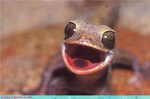 cute face happy lizard - 4281258496