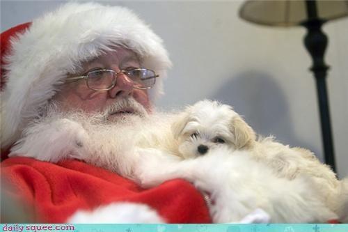 christmas cute puppy santa