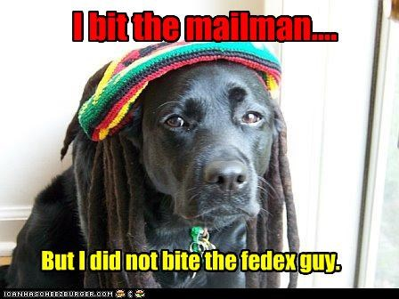 I bit the mailman.... But I did not bite the fedex guy.