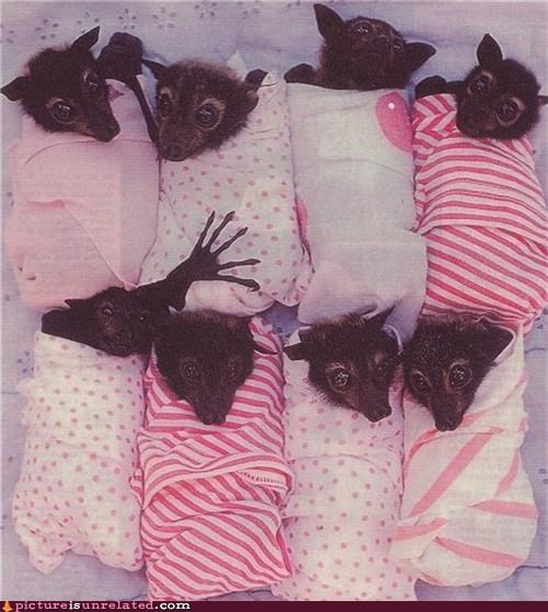 animals bats cuddly cute weird wtf - 4282024704