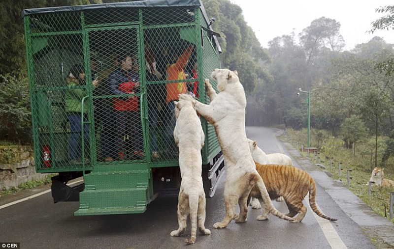 special zoo in China