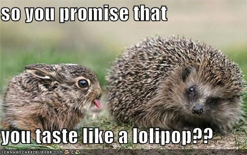 bunny caption captioned lies lollipop nervous pain porcupine promise sharp spiny taste - 4282386688