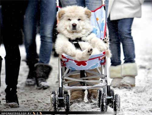 anthropomorphization awesome baby chow Command Hall of Fame hurry onward rolling stroller - 4282482944