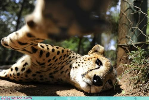 acting like animals beauty sleep cheetah cranky diva look makeup natural photo shoot photography sleepy tired upset waking up - 4282735360