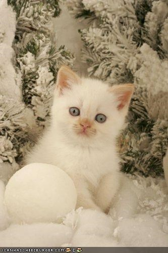 cyoot kitteh of teh day,snow,snowball,white,winter