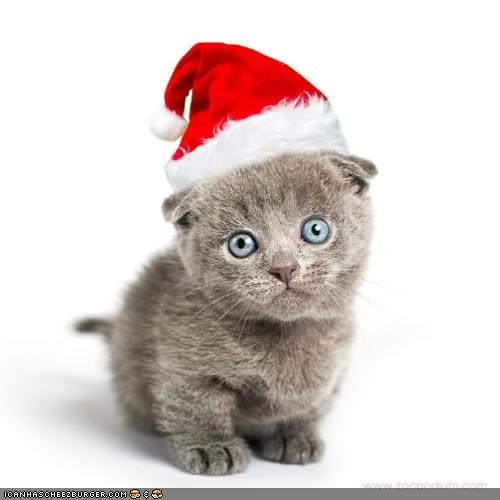 christmas,cyoot kitteh of teh day,holidays,kitten,santa,santa hat