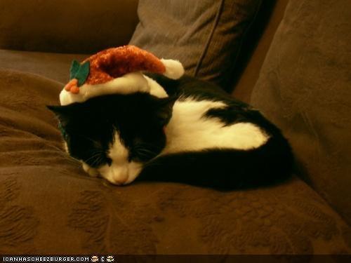 christmas cyoot kitteh of teh day holidays santa santa hat sleeping - 4282759936