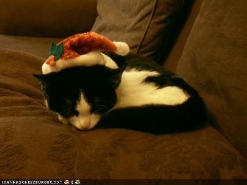 christmas,cyoot kitteh of teh day,holidays,santa,santa hat,sleeping