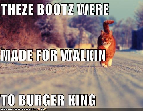 Cheezburger Image 4282862336