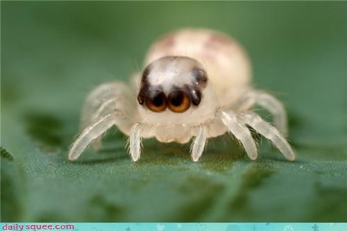cute Hall of Fame small spider squee white